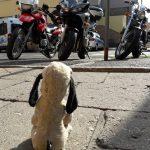 Pieniuś z motorkami (ten czerwony to mój)
